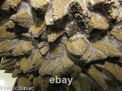 Rarest on Ebay 22.9 kgs / 50 PYRITE Mineral Specimen Its Beyond Super