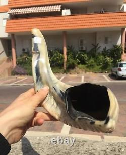 SUPER SALE @ Ram SHOFAR Horn Kosher Natural 19-21